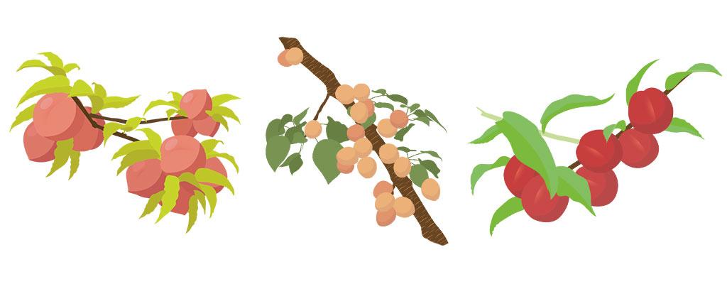 Obstbäume im Frühling: Pfirsich, Aprikose, Nektarine